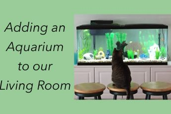 adding and aquarium to our living room