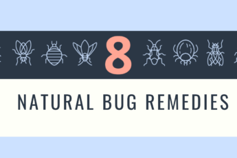 Natural Bug Remedies