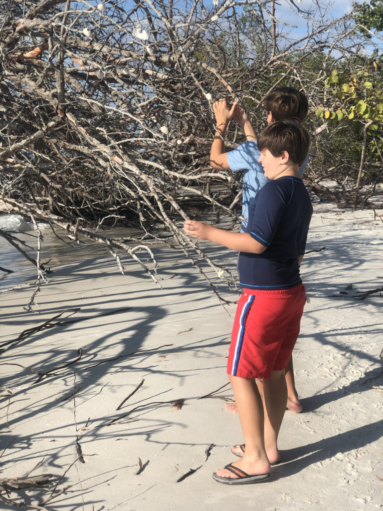 Beach Thanksgiving 2019
